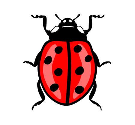 てんとう虫は、白い背景で隔離。