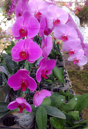 brilliance: Brilliance of orchids Stock Photo