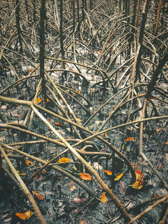 innumerable: The roots of the mangrove trees innumerable.