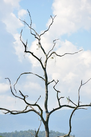 Dry tree against the blue sky photo