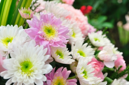 Gerberas for wedding decoration  photo