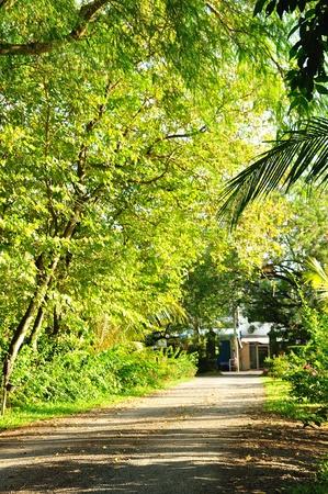 pedestrian walkway: Pedestrian walkway in garden with beautiful trees  Stock Photo