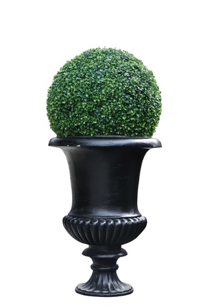 A modern plant pot isolated on white background, clipping path included