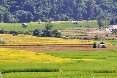 Field rice, good landscape in Thailand  photo
