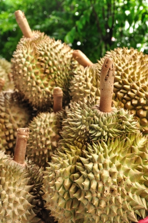 King of fruit fresh durians  in market at Thailand photo
