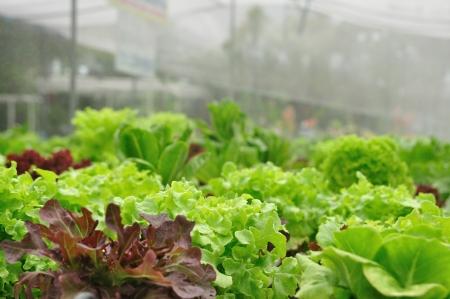 Close-up biologische plantaardige boerderijen, schoon voedsel