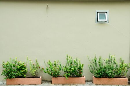 Wall with window and beautiful flowerpots