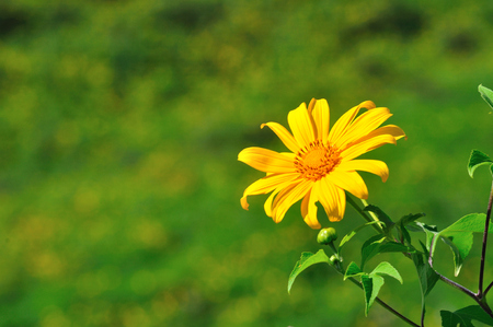 unseen: Thailand unseen, field of Mexican flowers weed  Stock Photo