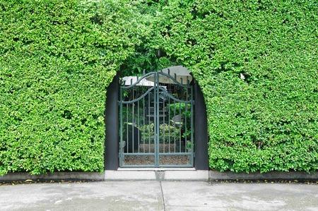 open garden gate: Garden gate for through to plant wall