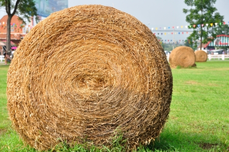 Row of haystack in garden  photo