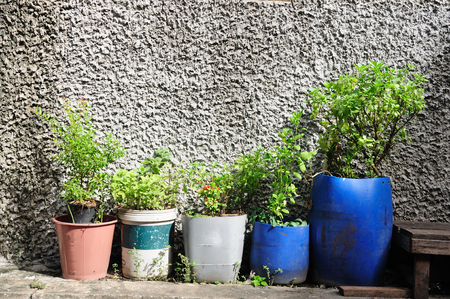 Many plant-pots from plastics gallons photo