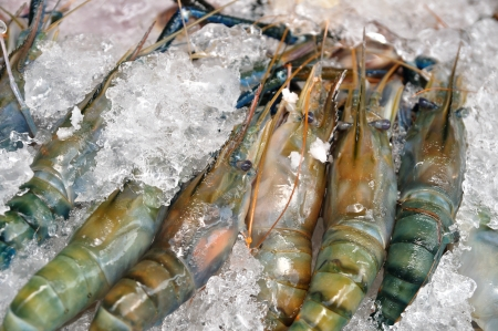 Many Black tiger prawn freeze with ice. Stock Photo