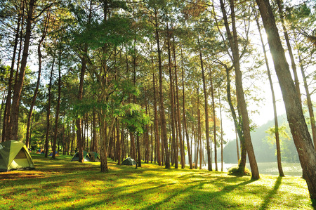 The Misty pine forest at North of Thailand, camping during holidays