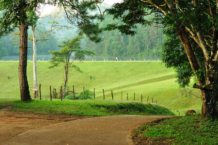 Natural-walkway countryside, North of Thailand  photo