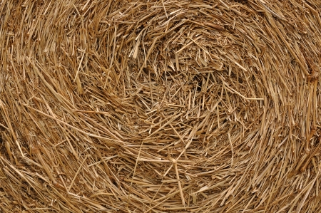 Close up roll of haystack, swirl pattern  photo