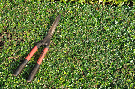 Used grasses scissor put on bush  photo