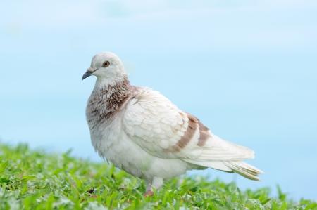 bodily: Portrait bodily movement action bird of peace Stock Photo