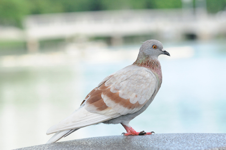 Portrait bodily movement action bird of peace Stock Photo - 23950460