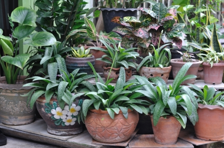 Many plant-pot for house decoration photo