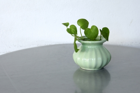 Green plants in small vase on table, Golden pothos