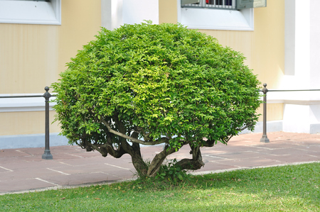 Small trees trimming in garden photo