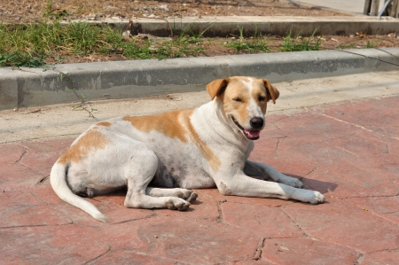Feral dog on street side  photo