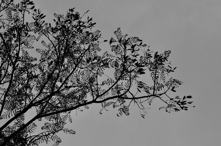 spiritless: Tree and branch in monochrome
