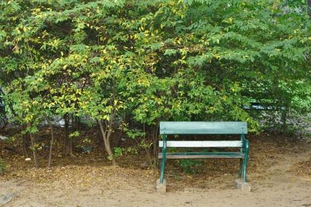 Green bench in public garden  photo
