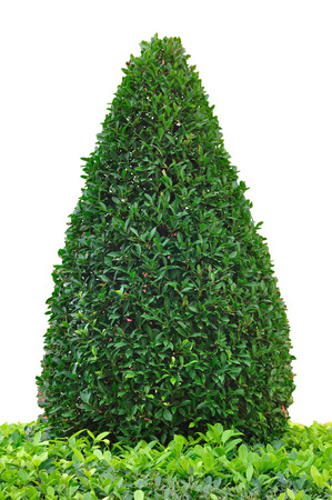 tree trimming: Tree trimming isolate on white background, clipping path included  Stock Photo