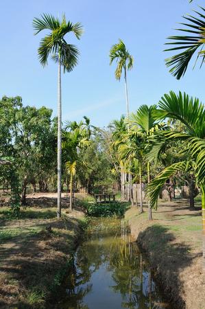 kona: Landscape of mangoes trees orchard Stock Photo