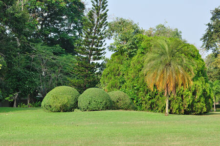 oxigen: Various bushes and trees in public garden.