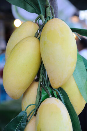 artificially: Yellow mangoes hanging in market, artificially. Stock Photo