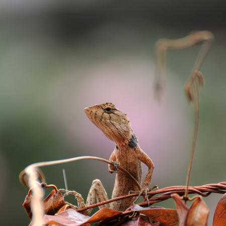 Small lizard climbing on brown leaf. photo