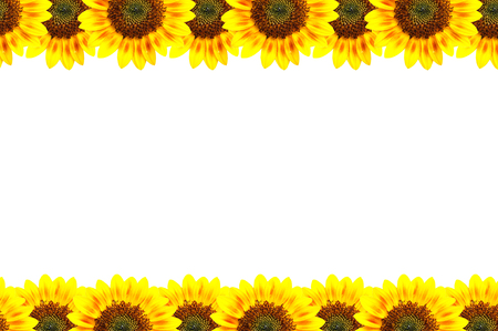 Sun-flower frame, art conception. photo