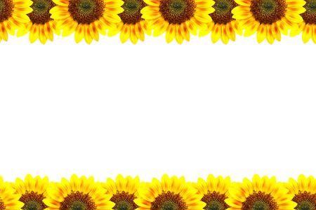 Sun-flower frame, art conception. photo