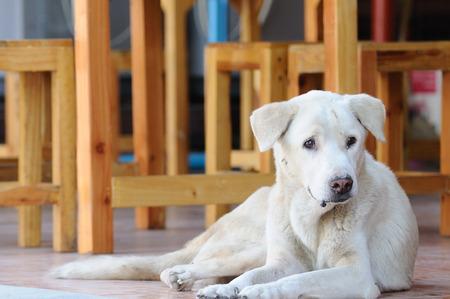 Abandoned homeless stray dog crouching on street