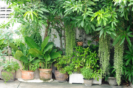 plants species: Various trees and plants species in backyard decorations Archivio Fotografico