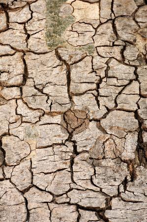 Tree bark texture for web background Stock Photo