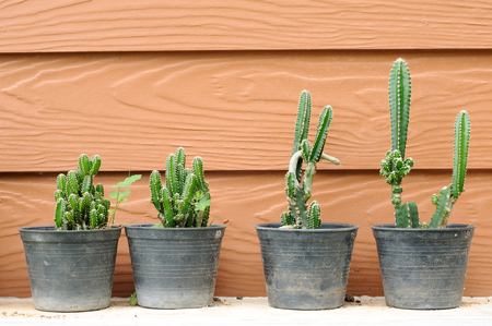5 black potted cactus with wooden house wall Stock Photo