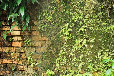 Plant and weeds on red block wall