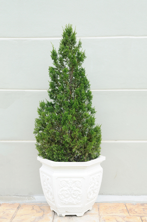 Green plant in white pot beside wall Stock Photo