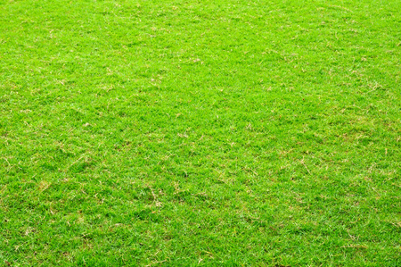 Green grass yard for background Stock Photo