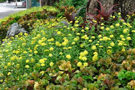 yarrow: Yellow flowers field nice gardening