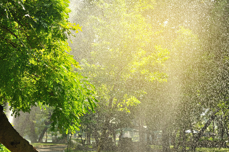 lloviendo: Watering tree with sprinkler look like beautiful raining with light flare.  Raining in park.