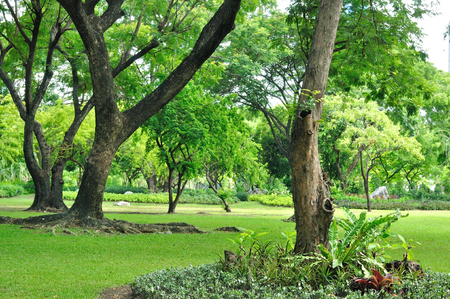 Garden decoration many trees, green yard be shady for people rest and relax in Thailand public park Stock Photo