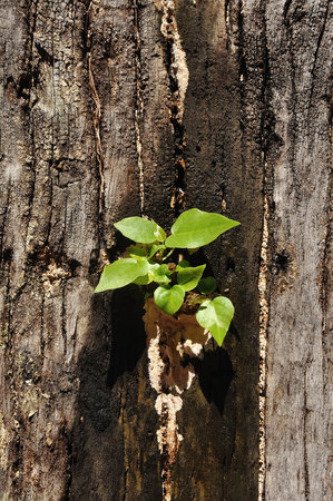 grown up: Small plants grown up on damp stump, Stock Photo