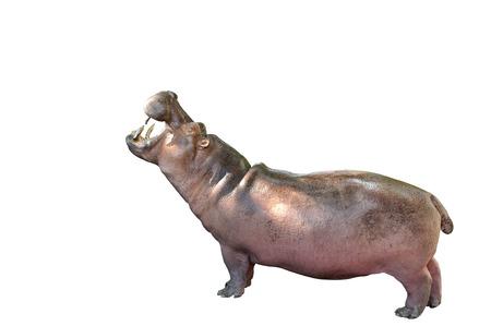 Hippopotamus stehend mit Beschneidungspfad. Standard-Bild - 72981792