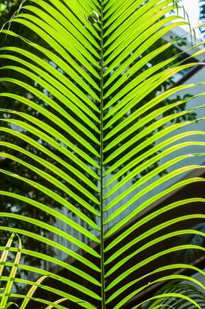 Green leaf with light for background. Stock Photo