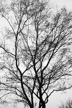 Silhouette dry branches pattern and texture background.