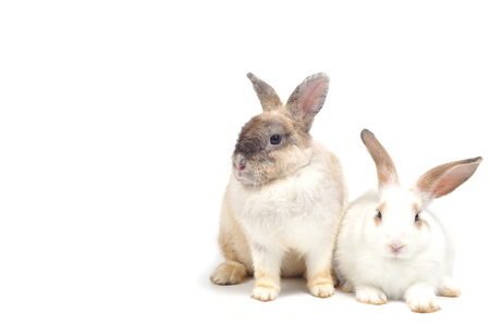 lop lop rabbit white: Double cute rabbits siting on white background. Stock Photo